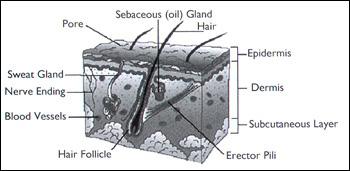 skin internal blavk and white
